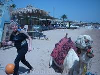 Ой!!!Верблюд так близко,а они ведь плюются...