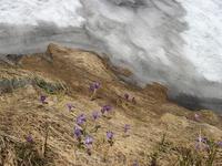 цветы и снег...