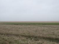 В полях вокруг Мон Сен Мишель пасутся овцы. Они едят траву, растущую на просоленной морской водой почве. Мясо этих овечек имеет особый солоноватый вкус ...