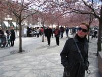 Небольшой Королевский парк в эти дни особенно любим посетителями, цветение японской вишни преображает его до неузнаваемости. Кроме того, парк – одна из ...