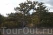 Прогулка по галицинской тропе (вроде так). Деревья танцуют Вальс