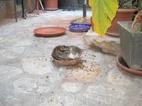 кошка из Дубровника
