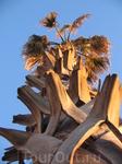 Рассматривая закатывающийся за горизонт солнечный шарик, посмотрел вверх. Сфотографировал увиденное. Очень необычный вид пальмы получился.