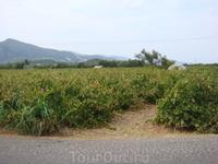 Виноград растет бесплатно, чем мы и пользовались почти 2 недели