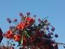 Парад цветов Блюменкорсо 3 мая 2014 года