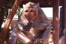Вольные обезьяны-экск-я по реке Квай