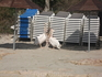 а вот и пеликаны на свободе ))