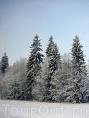 Рождественские каникулы в Эстонии.