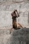 обезьяний парк В Пашупатинатхе