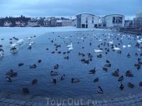 Озеро. Почти замерзло. С одной стороны все катаются на коньках на нем, с другой - кормят ненасытных уток и лебедей
