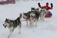 прогулки на собачьей упряжке