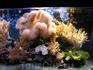 Морской музей-аквариум