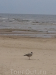 Пляжи Юрмалы славятся белым кварцевым песком.