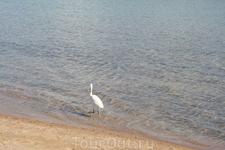птица гуляет по морю