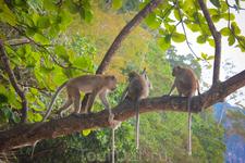 Три обезьяны)