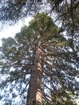 тоже какое-то невероятное дерево