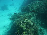 Подводный мир Красного моря - сюда стремятся дайвингисты.