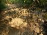 такими вот тропами на Аю-даг