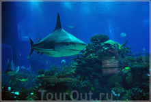 в океанариуме...