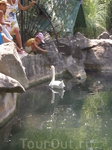 Воронцовский парк. Лебединое озеро