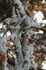 Водоросли опаясавшие ветви кипарисов