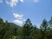 Вершина горы, да вся гора поросла огромными дереьями соснами, елями, березами.