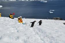 Встреча туристов с местным населением Антарктиды.