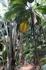 Праслин- второй по величине остров Сейшел. Самая главная его достопримечательность Майская долина- национальный парк где произрастают уникальные кокосовые ...