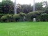 Фотография Экзотический парк на Тенерифе
