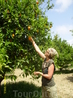Во время джипсафари заезжали в апельсиновый сад, тгде за небольшую денежку можно было сорвать несколко апельсинов. Кстати, большая разница с теми апельсинами ...