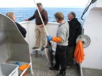 А вот и первый улов у шкипера на багре. Однако, неслабые рыбины тут водятся, вопреки ожиданиям!