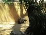 Ехидна в жестком минизоопарке WILD LIFE Sydney Zoo