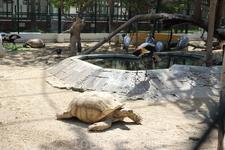 """""""Покатай меня, большая Черепаха!"""" Ну очень большая!"""