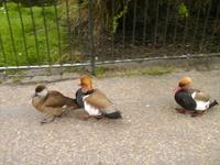 Королевские парки - это что-то. Прямо под ногами разгуливают экзотические птицы и животные, людей совершенно не боятся, выпрашивают корм.