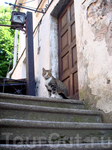и снова, кот! житель крепости :)