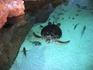 Еще один открытый бассейн. Огромная морская черепаха. Кстати, если извернуться и укрыться от глаз бдительного охранника, то можно погладить ее