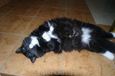 Это хозяйская кошечка Зина, мы с ней подружились .
