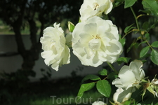 Розы Родоса