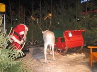 в центре города свободно гуляют олени и Санта Клаусы, в данный момент они заняту ну очень важным делом