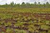 Просторы Рдейского болота