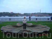 Ракушка перед зданием, где вручают Нобелевские премии