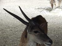 У животных в зоопарке Белграда глаза счастливые.