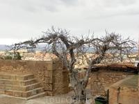Странное дерево, растущее в углу Оружейной площади. Я почему-то подумала, что оно тут застыло, практически окаменело, в своем нахохленном состоянии со ...