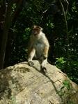 дикие обезьянки, очень милые и дружелюбные в отличии от балийских