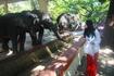 Янгонский зоопарк, кормлю слона :)