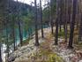 Река и лес по дороге из Осло в Гейрангер
