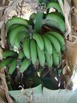 Много бананов на банановом острове в Луксоре