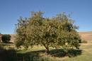 вокруг монастыря много фруктовых деревььев