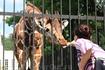 Калининградский зоопарк. Животных кормить...разрешается
