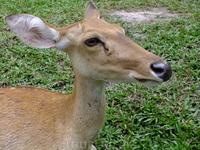 Открытый зоопарк Кхао Кхео.